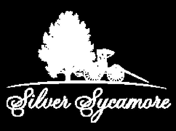 Silver Sycamore